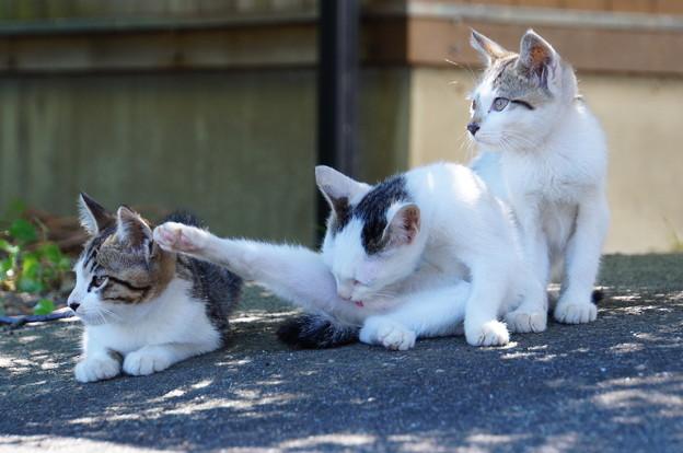 沖島のネコたち_8