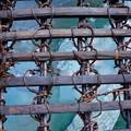 写真: 祖谷のかずら橋_4