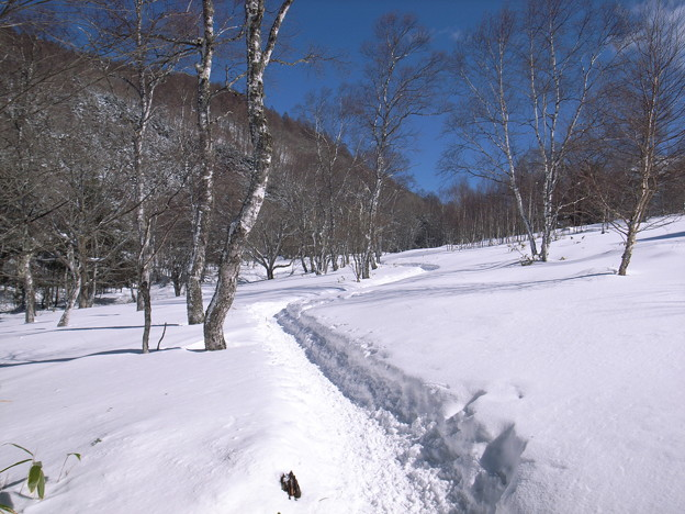 日本の山 雪山講習会(STEP2) 蓼科山 雪原のトレイルを行きます。