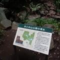 No.2 おとめ山公園(新宿区)