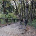 木を縫う階段