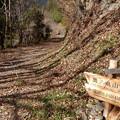Photos: すぐ林道へ