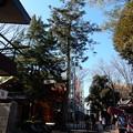 大国魂神社モミノキ