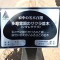 Photos: No.87号 多磨霊園のサクラ並木(シダレザクラ)