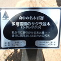No.87号 多磨霊園のサクラ並木(シダレザクラ)
