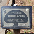 Photos: No.102号 多磨霊園のトチノキ並木