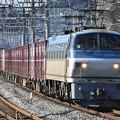 写真: 貨物列車 (EF66114)