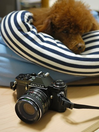 PENTAX MEsuper + Albinar ADG 28mm 1:2.8 macro focus