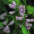 紫色の花20160907