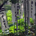 鶴岡八幡宮のぼり20160907