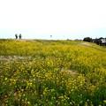 春の荒川土手