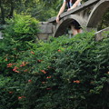 Photos: 橋と花