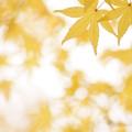 秋色がいっぱい
