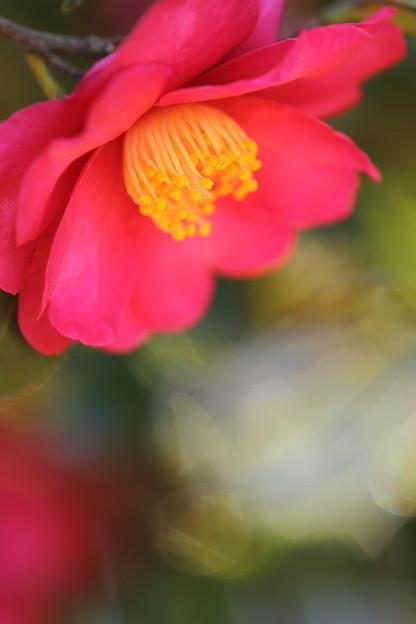 冬を愛する花