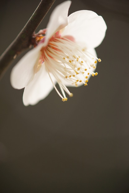 Photos: 春一輪
