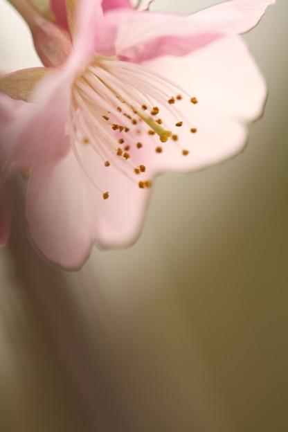 Photos: 春、まだですか