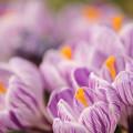 写真: 春ららら