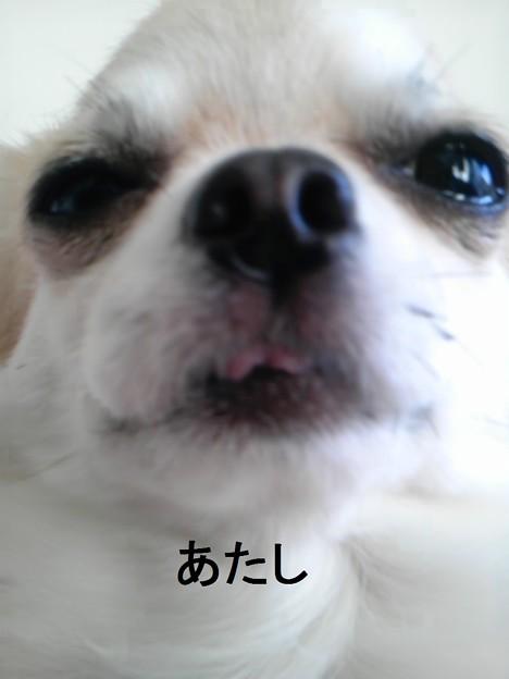 PAP_0031
