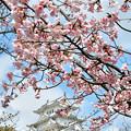 3/28 姫路城