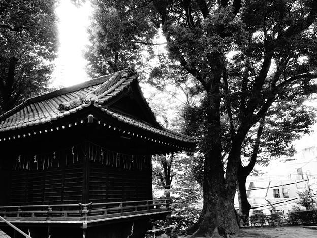 西向天神社 (新宿区新宿)