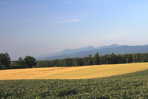 写真: 小麦畑の向こうに