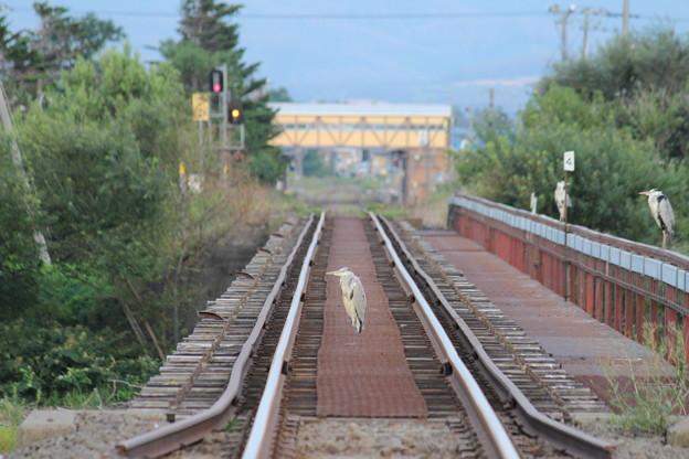 その1 JR釧網線を占領