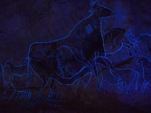 ラスコー展 (16) 黒い牝牛