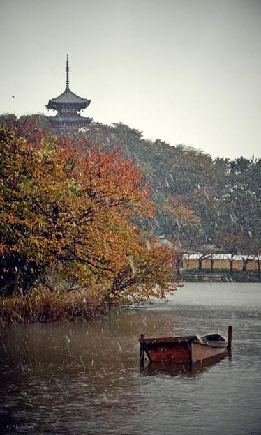 雪の三溪園。