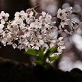 Photos: 春煌。