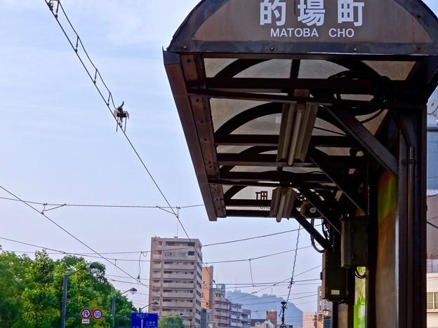 広島電鉄 電車検知装置 トロリーコンタクター 皆実線 的場町電停 広島市南区的場町1丁目 比治山通り