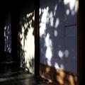 写真: 障子に映る木漏れ日