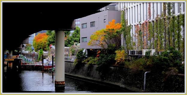 常盤橋公園の紅葉