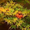 杜の紅葉2