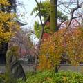お山の紅葉風景1