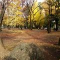 お山の紅葉風景4