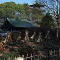 上野東照宮・牡丹苑