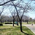 2017.4.2.の花園中央公園