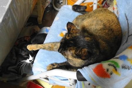 チビタンがマメタンに猫パンチ