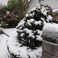 初雪・・・我が家の庭