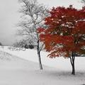 初雪・・・竹葉公園