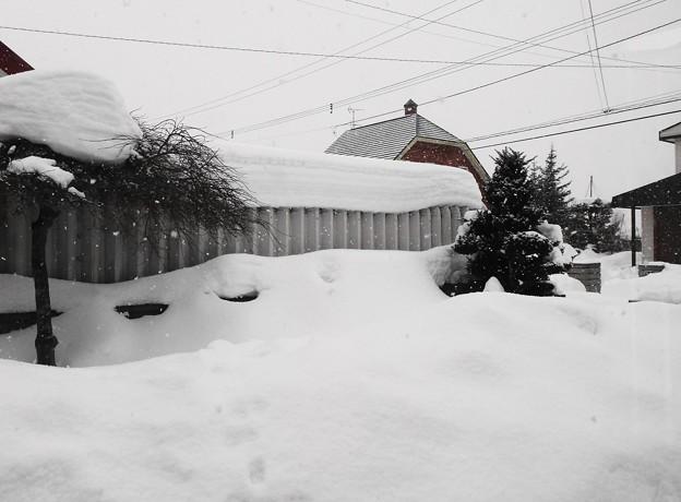 我が家の庭の積雪
