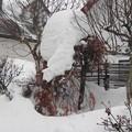 Photos: 我が家の庭の積雪