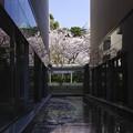 Photos: 桜とともに