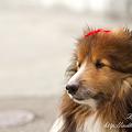 Photos: 愛犬 EOS7D EF50 F1.4