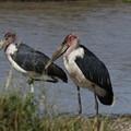 Photos: アフリカの動物ポートレイトシリーズ38