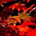写真: 秋色木の葉 2