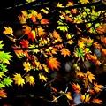 写真: 秋色木の葉 3