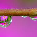 写真: 雨の忘れ物