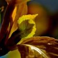 写真: 春物語