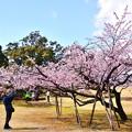 写真: 春を撮る